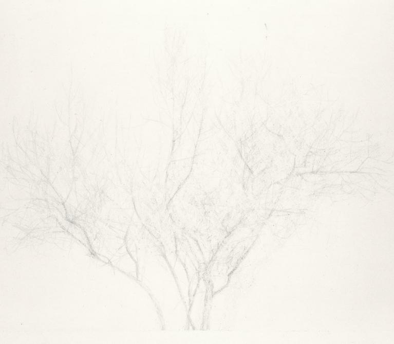 Vanessa Tran, Untitled